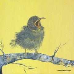 Baby Bird, Feed Me