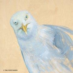 Seagull Larceny